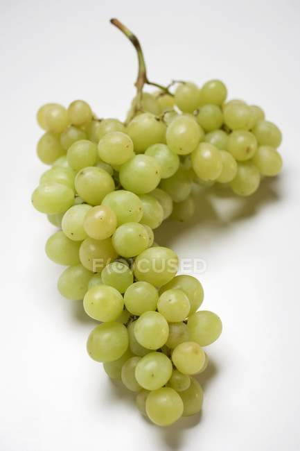 Bunch of Muscat green grape — Stock Photo