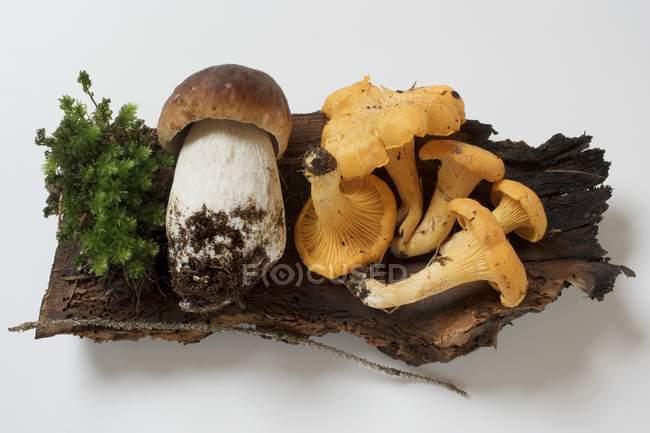 CEP und Pfifferlinge auf Stück Holz — Stockfoto
