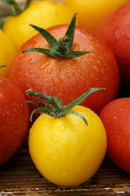Vários tipos de tomates — Fotografia de Stock