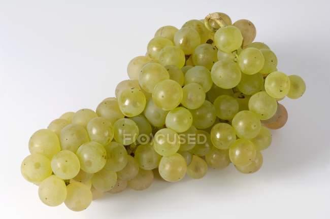 Bunch of Gutedel green grape — Stock Photo