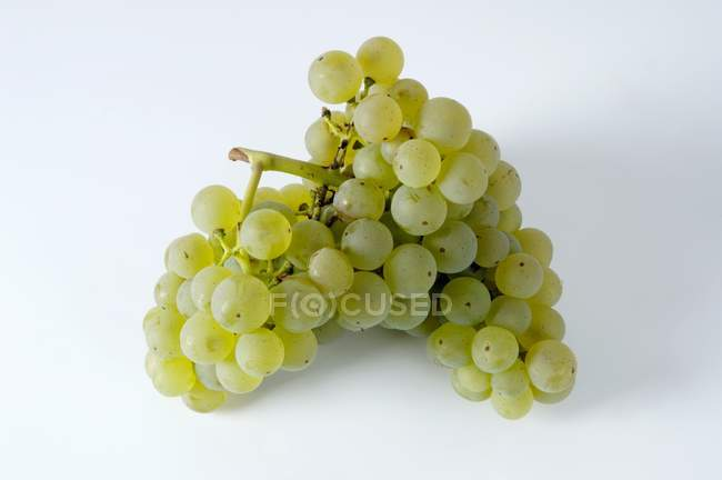 Bunch of Schnburger green grape — Stock Photo