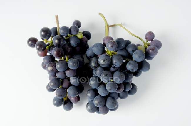 Bunches of Sptburgunder black grape — Stock Photo