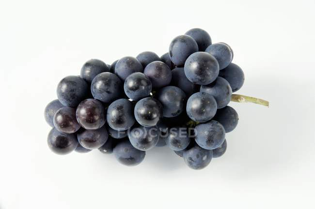 Bunch of Mllerrebe black grape — Stock Photo