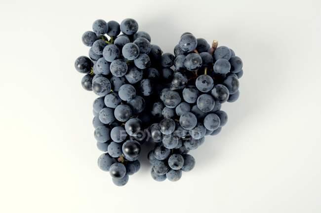 Bunches of Regent black grape — Stock Photo
