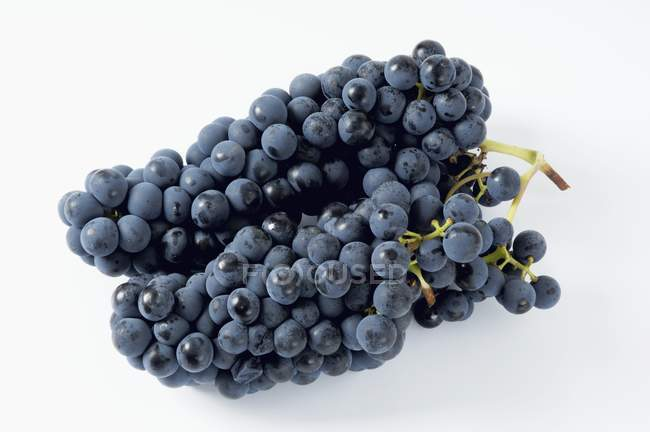 Bunches of Solara black grape — Stock Photo