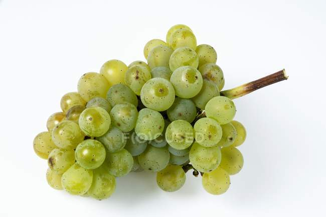 Fresh ripe green grapes — Stock Photo
