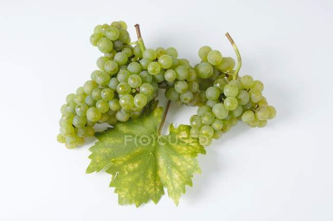 Bunches of Rieslaner green grape — Stock Photo