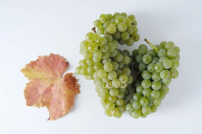 Bunches of Bachus green grape — Stock Photo