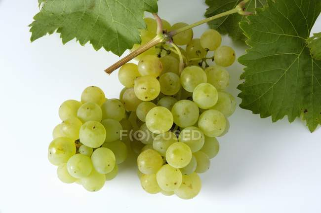 Bunch of Bachus green grape — Stock Photo