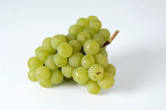 Frische reife grüne Trauben — Stockfoto