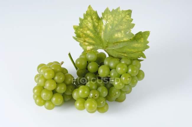 Bunch of green grape — Stock Photo