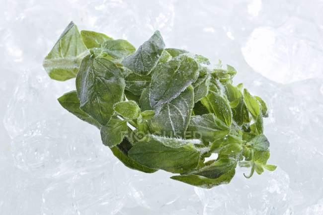 Frozen tarragon leaves — Stock Photo