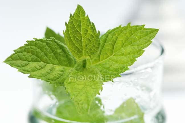 М'ята перцева склянку води — стокове фото