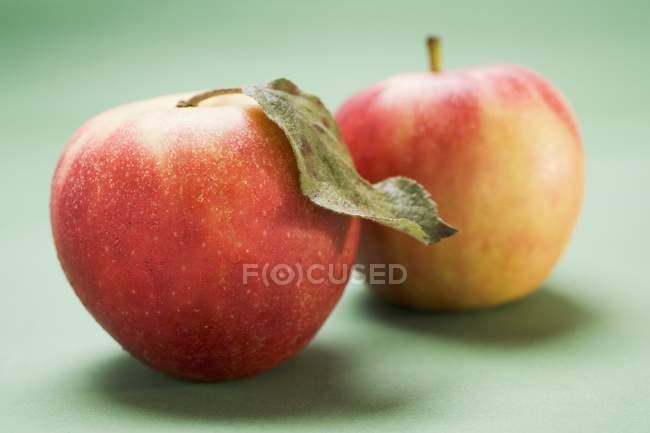Two Elstar apples — Stock Photo