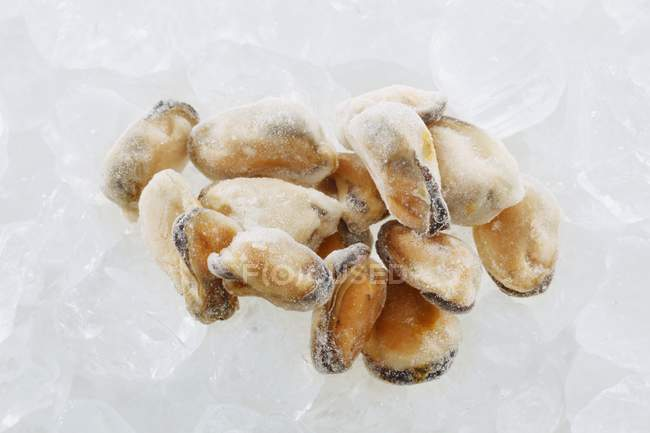 Замороженные мидий без оболочки — стоковое фото