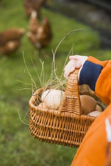 Mani con il cestino delle uova — Foto stock