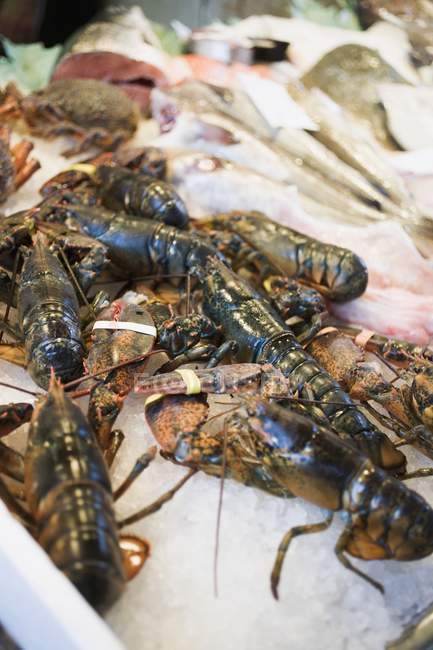 Fresh lobsters on market stall — Stock Photo