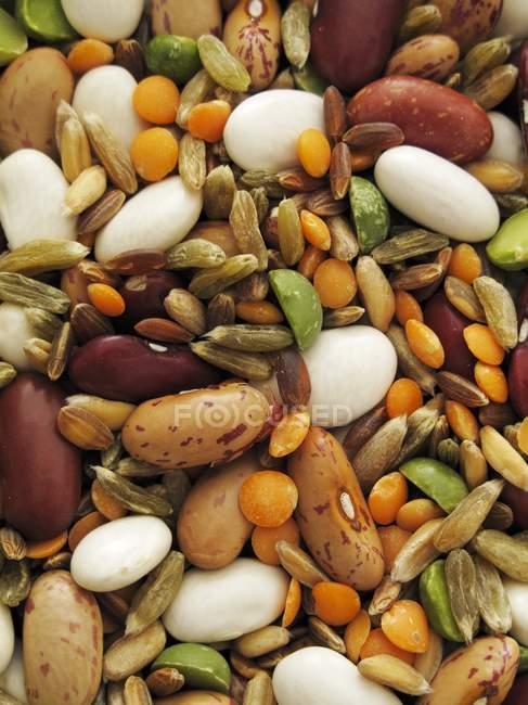 Квасоля з сочевиці і кукурудзи — стокове фото