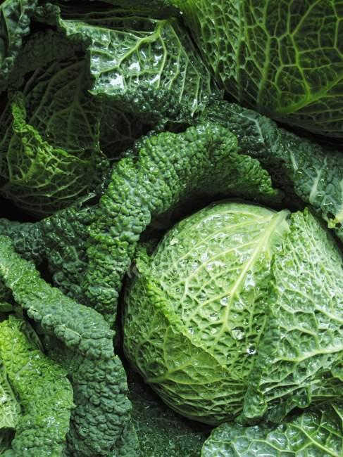 Свежие савойской капусты — стоковое фото
