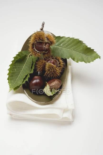 Castañas dulces con hojas - foto de stock
