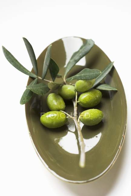 Оливкова гілочка з зеленими оливками — стокове фото