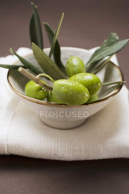 Оливковое Веточка с зелеными оливками — стоковое фото