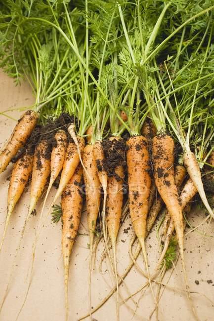 Jóvenes zanahorias frescas recogidas - foto de stock