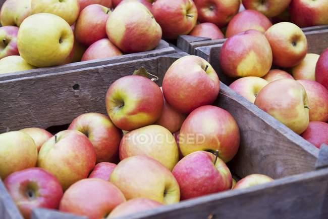 Fresh Apples in Crates — Stock Photo