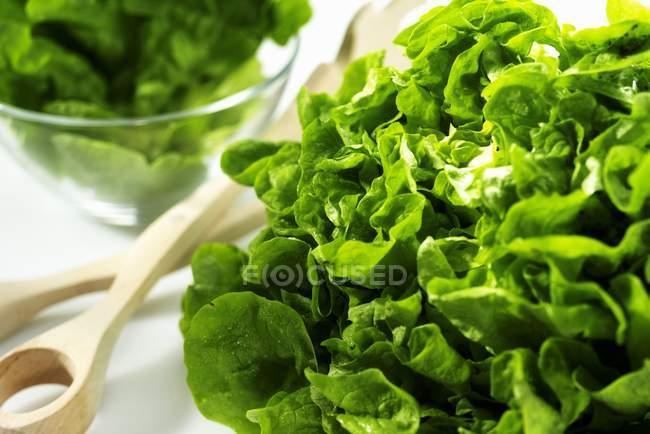 Зелений салат салат — стокове фото