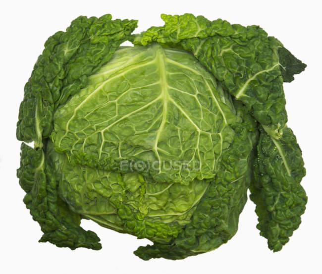 Зеленой савойской капусты — стоковое фото
