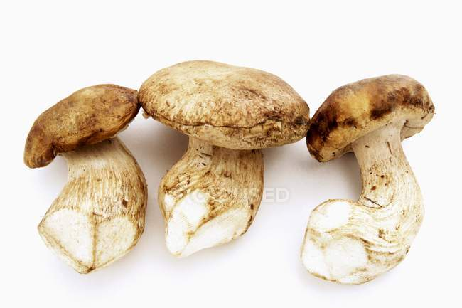 Three whole ceps — Stock Photo
