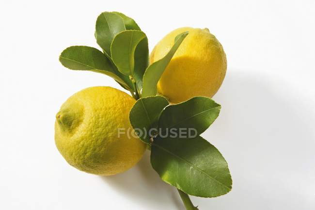 Два лимонів на гілці — стокове фото