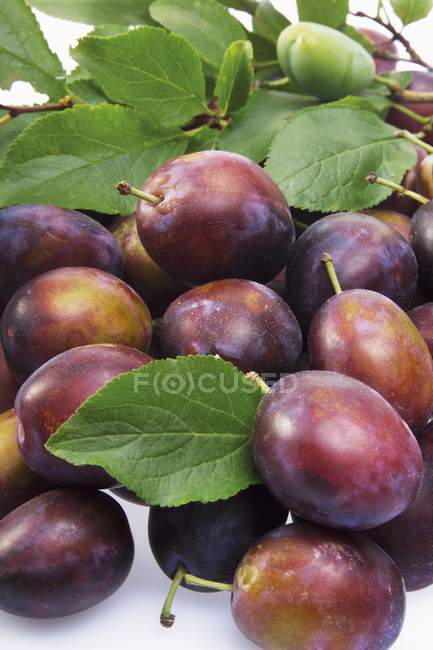 Fresh picked plums — Stock Photo