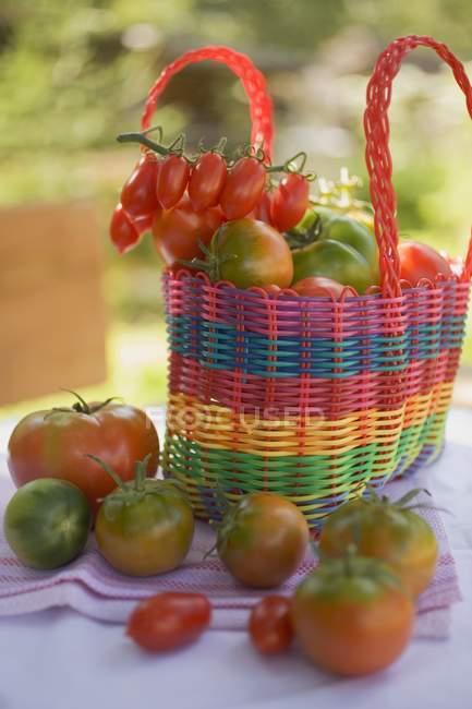 Различные типы помидоров — стоковое фото