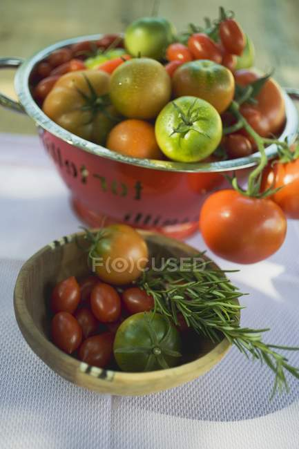 Différents types de tomates — Photo de stock