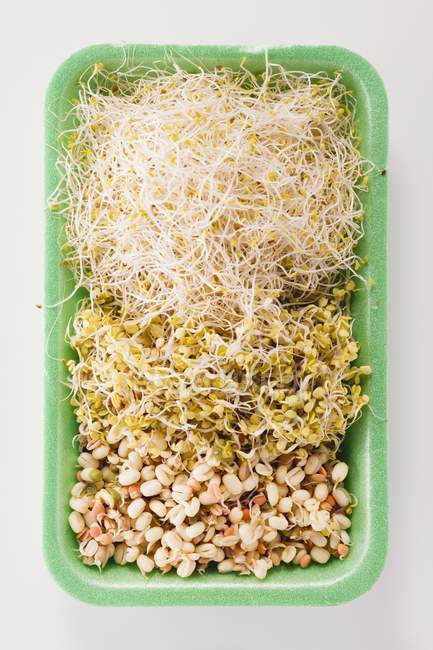 Vari tipi di germogli — Foto stock