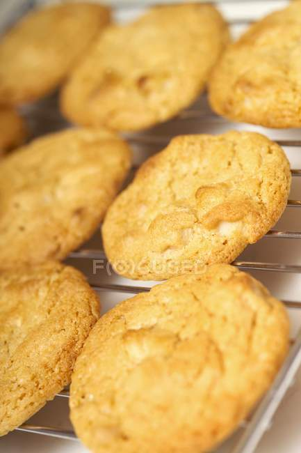Galletas de chocolate blancos - foto de stock