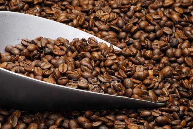 Montón de granos de café tostados - foto de stock