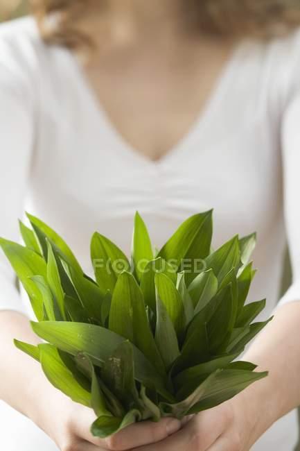 Ramsons frais ail sauvage — Photo de stock