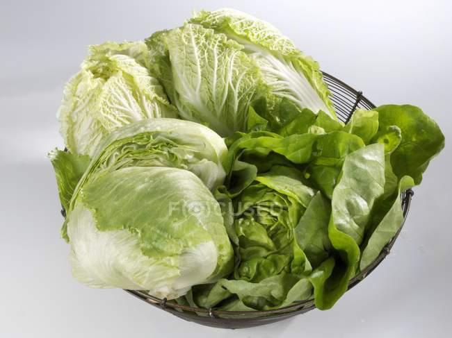 Китайская капуста и салат Айсберг — стоковое фото