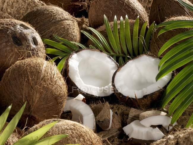 Cocos enteros y abiertos - foto de stock