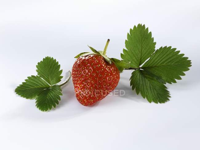 Ripe strawberry with leaves — Stock Photo