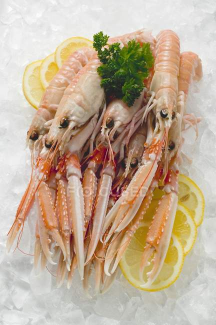 Closeup view of scampi heap on crushed ice — Stock Photo