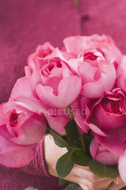 Closeup view of hands holding bunch of pink roses — Stock Photo