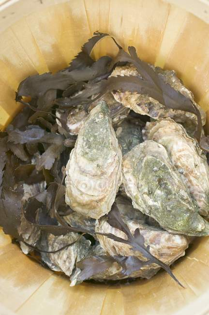 Fresh oysters in woodchip basket — Stock Photo