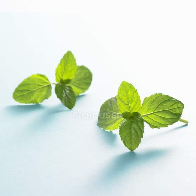 Свежий зелёный мята — стоковое фото