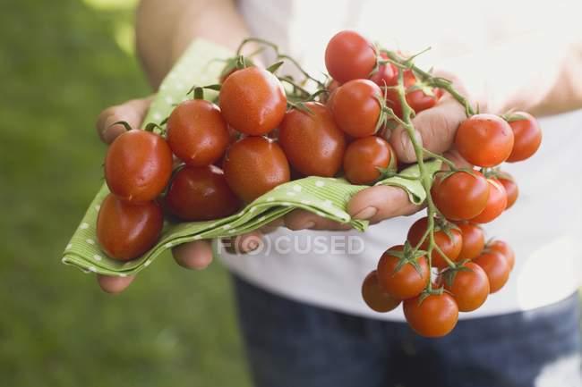 Manos sosteniendo tomates frescos - foto de stock