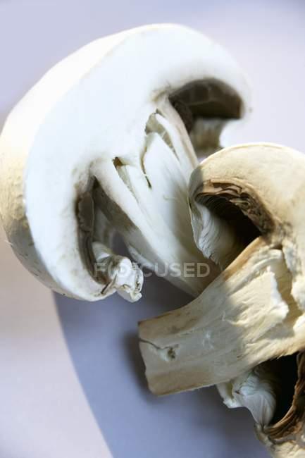Button mushroom, close-up — Stock Photo