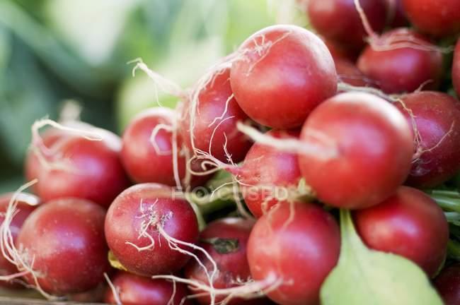 Свежие спелые редис — стоковое фото