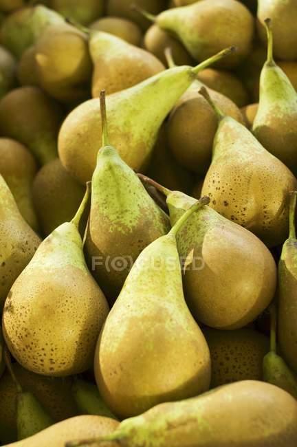 Peras frescas de amarelas maduras — Fotografia de Stock